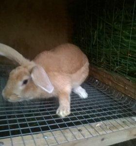 Мясо кроликов