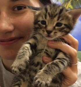 Котёнок в добрые руки 😻