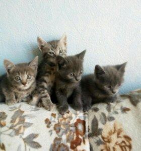 Домашнии котята