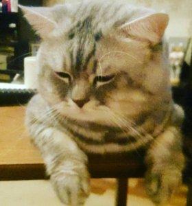 Вязка котов в коломне