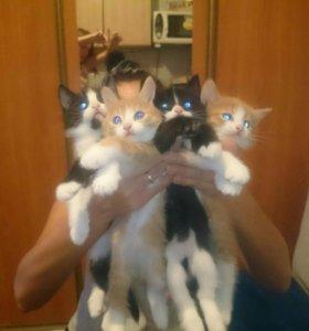 Котята 😻
