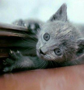 Срочно ищут дом домашние котята(доставка)