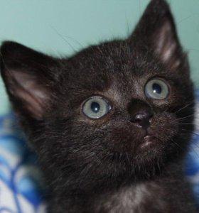 Котенок в добрые руки Виски,кот в дар
