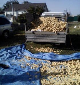 Экструдированная кукуруза
