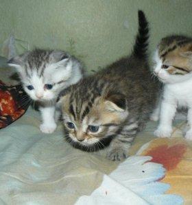 Плюшевые котодетки