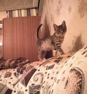 Котенок, 2 месяца