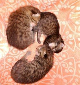 Замечательные котята ищут дом!