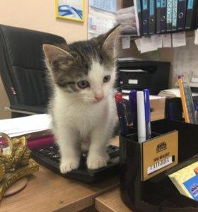 Кошечка в добрые ручки