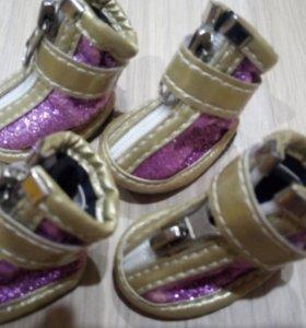 Обувь для маленькой собаки