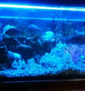 Аквариум целиком с рыбами тумба фильтра.Возможна п