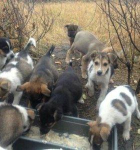 Милые щеночки ищут дом