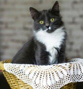 Кот вязка фрязино