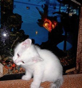 Очаровательный котенок Умка, в заботливые руки.
