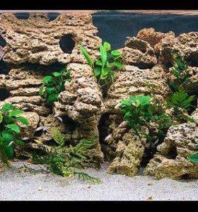 Камень в аквариум