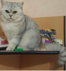 Отдадим котика в добрые руки