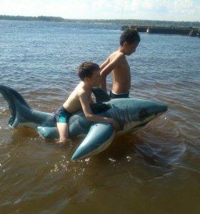 Акула. Балон для плавания.