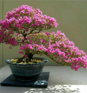 Цветы-деревья*