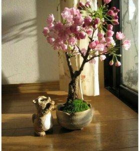Розовая сакура*