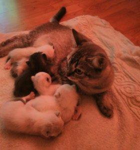 Кошка и катята 10 дней срочно бесплатно