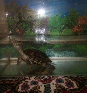 Водяная черепаха с аквариумом.