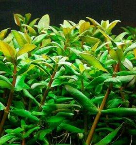 Растения новинки