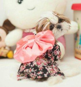Кимоно для собачки