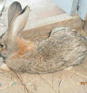 кролики - занятие для души