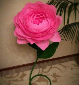 Цветы в аренду ,на заказ, в подарок...