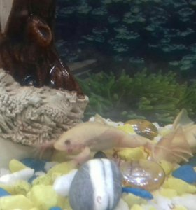 Лягушка для аквариума
