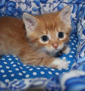 Котенок в добрые руки Мартин, кот в дар