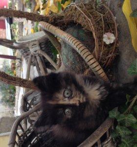 Симпотяжка кошка