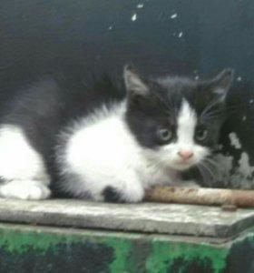 котик-мальчик