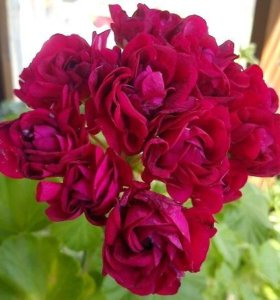 Комнатные цветы разные, самые прекрасные!