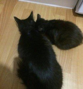 Кошка Багира и мелкий Вася