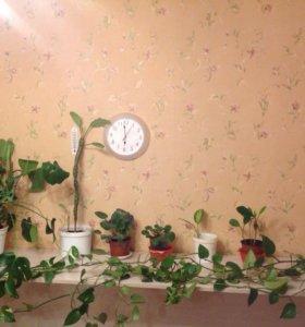 Растения в горшках (5разных)