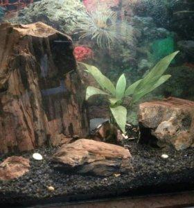 Отличный аквариум