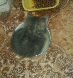 Котята пушистые.
