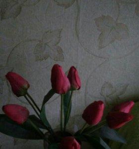 Срочно луковицы тюльпанов