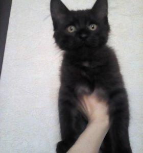 Отдам даром котят.