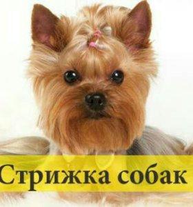 Стрижка собак и кошек (груминг)