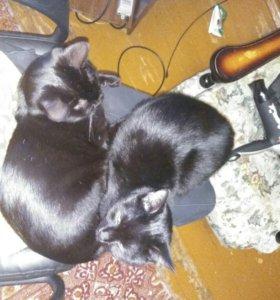 передержка котов/кошек в Пушкино