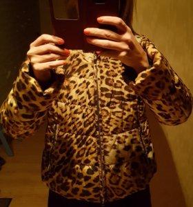 Куртка R.Cavalli