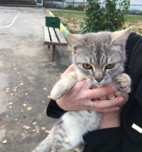 Отдам кошку в добрые руки