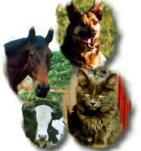 Ветеринарное обслуживание