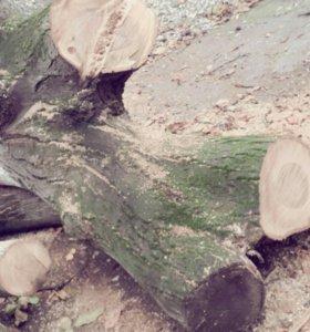 Ореховое дерево продаеться