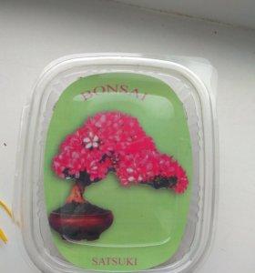 Набор для выращивания дерева бонсай