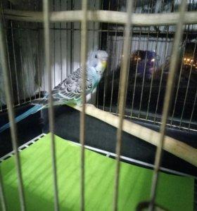 Попугайчик с гнезда