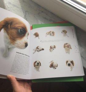 Новая книга про собак