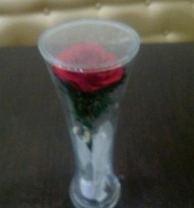 Вечная роза в колбе.