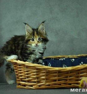 Корзинка-лежанка для маленькой собачки или котенка